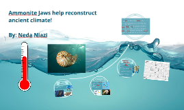 Ammonite Jaws help reconstruct ancient climate!