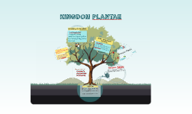 Curriculum Innovation: 2002 Basic Education Curriculum