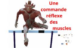 La commande réflexe du muscle.