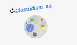 Clostridium  sp.