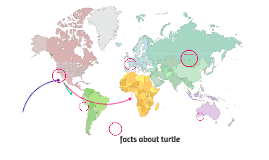 facts about turtle