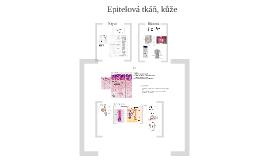 Epitelová tkáň, kůže