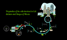 Copy of Copy of Organelles of the cells involved in Cell division and Stages