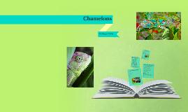 Copy of Chanelon