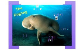 The Dugong Dugan