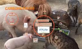 CARBOHIDRATOS EN NUTRICIÓN ANIMAL