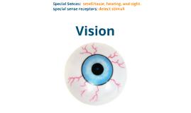 Special Senses: Vision!