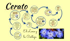 Cerato - El Loco / La Certeza