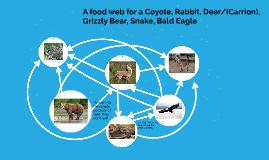 rabbit, snake, wolf, bear, deer, eagle
