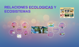 Copy of RELACIONES ECOLOGICAS Y ECOSISTEMAS