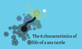 the 8 characteristics of life of a turtle by becca thomas on prezi