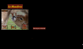 Copy of Caracteristicas y clasificacion de los mamiferos