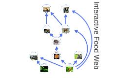 Interactive Food Web