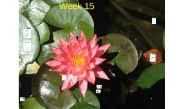 EAP Week 15