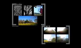 AEAH Photo Series