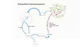 Copy of Extracellular Immuneresponse