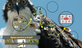Aves comunes Las Brisas