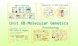 Unit 6, Pt 2: Molecular Genetics