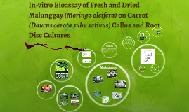 Copy of Copy of Copy of In-vitro Bioassay of Fresh and Dried Malunggay (Moringa olei