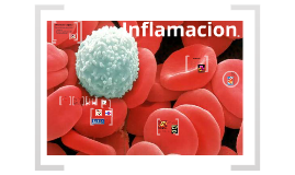 Copy of Inflamacion