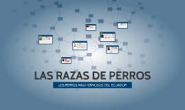 LOS PERROS MAS HERMOSOS DEL  ECUADOR