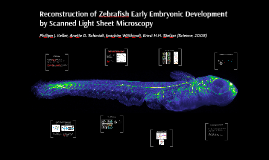 Reconstruction of Zebrafish Early Embryonic Development by S