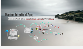 Marine: Intertidal Zones
