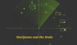 Copy of Marijuana and the Brain