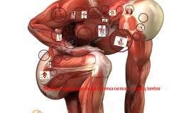 Músculos superficiales de las regiones cervical, dorsal y lumbar