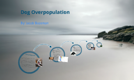 Dog Overpopulation Prezi