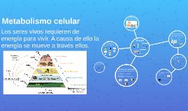 2.9 Metabolismo celular