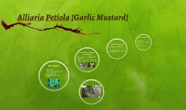 Alliaria Petiola