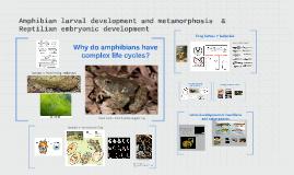 larval development and metamorphosis