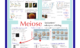 Copy of Celdeling: Deel 3 - Meiose