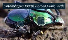 Onthophagus Taurus Dung Beetle