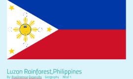 Luzon Rainforest,Philippines