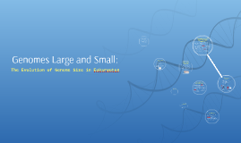 Genomes Large and Small: