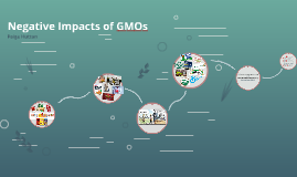 Negative Impacts of GMOs
