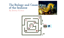 Biology and Conservation of the Seahorse