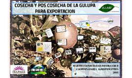 COSECHA Y POS COSECHA DE LA GULUPA PARA EXPORTACION