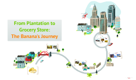 From Plantation to Grocery Store: The Banana's Journey