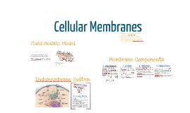 BI 2: Cell Membrane Structure