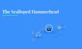 The Scalloped hammerhead