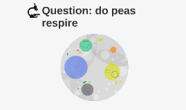 Question: do peas respire