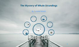 Copy of Whale Strandings