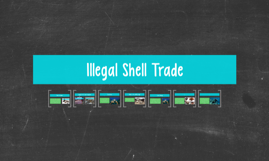 Illegal Shell Trade