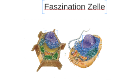 Faszination Zelle