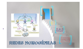 Copy of REDES HOMOGENEAS