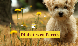 Diabetes en Perros