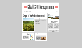 Copy of GRAPES Of Mesopatamia